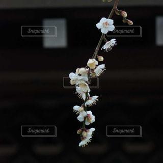 テーブルの上の花の花瓶の写真・画像素材[1789384]