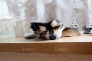 犬の写真・画像素材[201964]