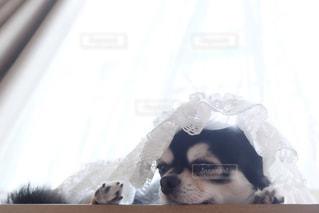 犬の写真・画像素材[201965]