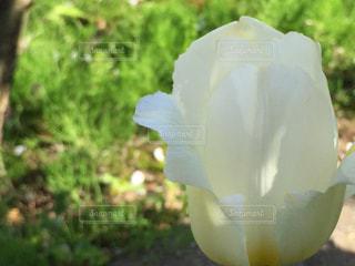 春の写真・画像素材[445201]