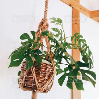 近くの植物のアップの写真・画像素材[1100727]