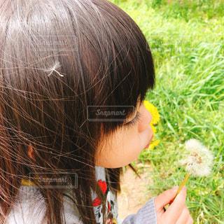 タンポポと少女の写真・画像素材[2073503]