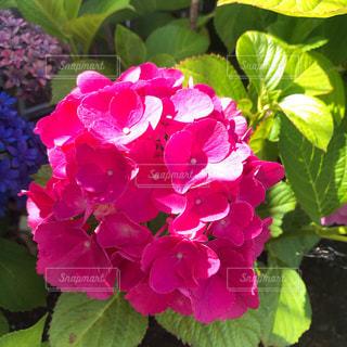 夏の玄関に咲く花の写真・画像素材[2225828]