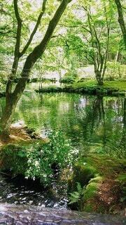 水辺🌊と自然🌲の写真・画像素材[4592656]