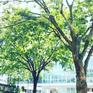 初夏の木々の写真・画像素材[4636765]