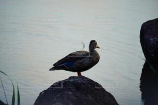岩に立つ鳥の写真・画像素材[4666683]