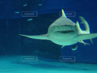 サメの写真・画像素材[204248]