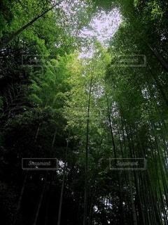 光と影の竹林の写真・画像素材[4589609]