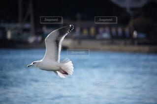 海の上を飛ぶカモメの写真・画像素材[4595770]