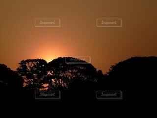 夕焼けと森の写真・画像素材[4604362]