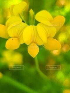 野に咲く小さい花の写真・画像素材[4690980]