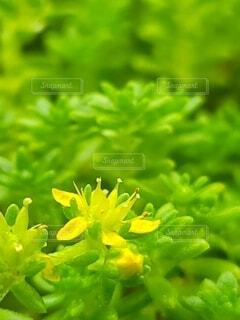 路地に咲く小さな黄色い花の写真・画像素材[4736900]