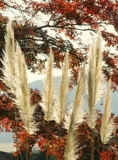 秋の風景の写真・画像素材[4818682]