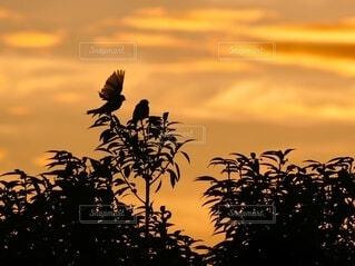 朝焼けとスズメの写真・画像素材[4831404]