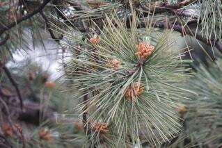木の中で育つ植物の写真・画像素材[4574719]