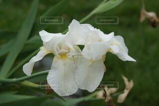 花のクローズアップの写真・画像素材[4576682]