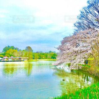 青空と桜の写真・画像素材[4573635]