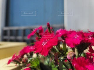 花のクローズアップの写真・画像素材[4583445]