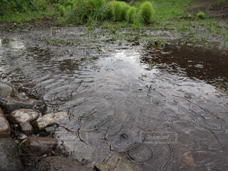 雨の恵みの写真・画像素材[4590234]