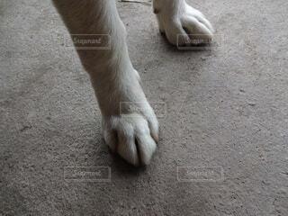 かわいい前足の写真・画像素材[4592964]