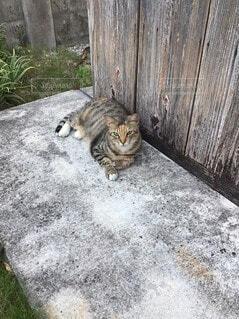 待ち伏せ猫の写真・画像素材[4654907]