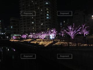 桜の写真・画像素材[303848]