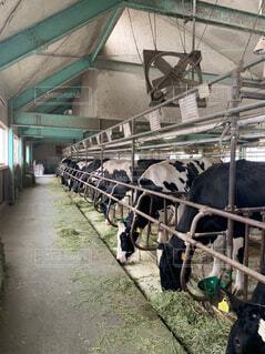 建物の上に立っている牛の群れの写真・画像素材[4622108]