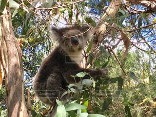 オーストラリアの写真・画像素材[307086]