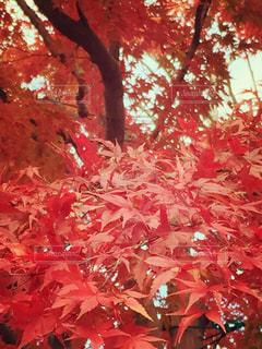 秋の写真・画像素材[203021]