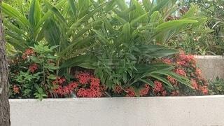 小さな赤い花と緑の写真・画像素材[4627604]