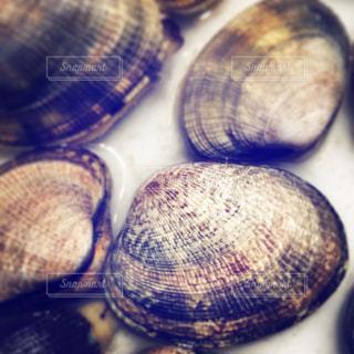 貝の写真・画像素材[203270]