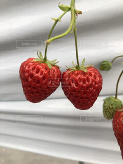 果物のクローズアップの写真・画像素材[4594645]