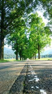 道路と木々の写真・画像素材[4620399]