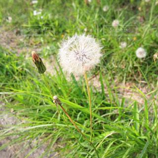 草木とタンポポの写真・画像素材[4620406]