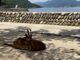 木陰の鹿の写真・画像素材[4670278]