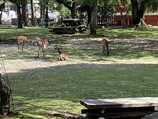 木陰でくつろぐ鹿の写真・画像素材[4670288]