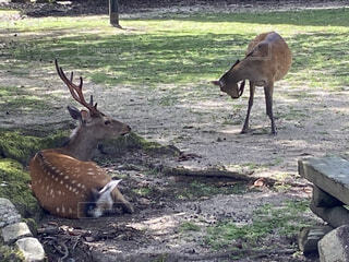 木陰で休む鹿の写真・画像素材[4670293]