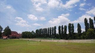 青空の下の牧場に羊がいましたの写真・画像素材[4665207]