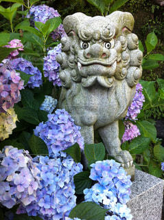 神社の写真・画像素材[203285]