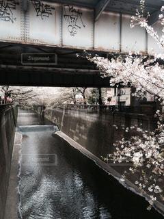 春の写真・画像素材[203288]
