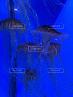 神秘的なクラゲの写真・画像素材[4617409]