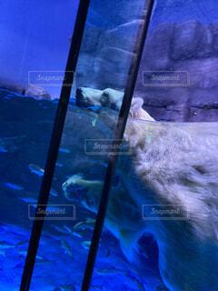 水族館で優雅に泳ぐシロクマの写真・画像素材[4617426]