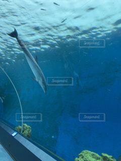 イルカの写真・画像素材[4617424]