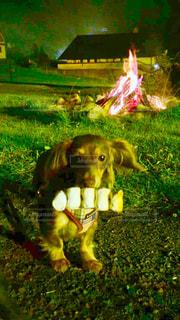 犬 - No.203761
