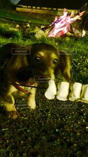 犬の写真・画像素材[203775]