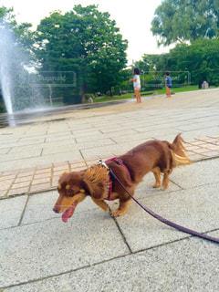 犬の写真・画像素材[203801]
