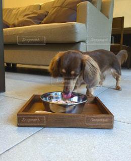 犬の写真・画像素材[203870]