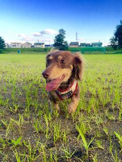 犬の写真・画像素材[203888]