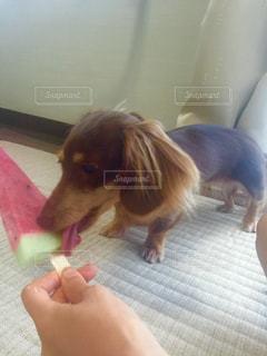 犬の写真・画像素材[203927]