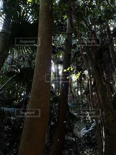 森の中の木の写真・画像素材[4383187]